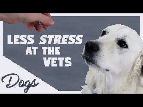 Less Stress at the Vets | Dogs