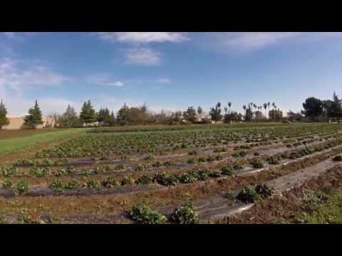Tour of Certified Organic Farm with Hmong Farmers in Fresno