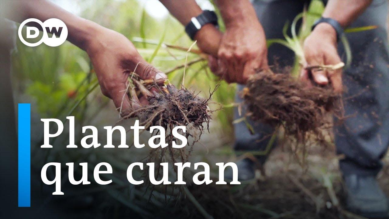 Medicina ancestral y complementaria en Perú