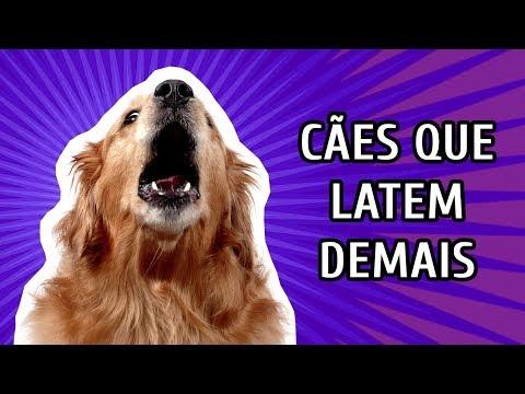 Latido excessivo - Como lidar com cães que latem demais