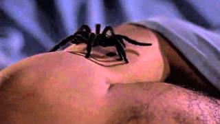 Download James Bond versus deadly spider Video
