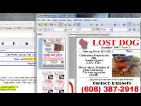 Create LDOW  3 Lost Dog Flyers