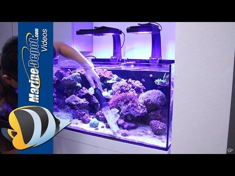 How to Restore a Neglected Reef Aquarium