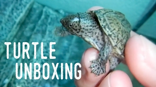 QUARTER-SIZED BABY TURTLE UNBOXING | New Additions!
