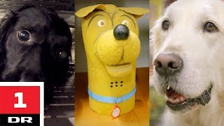 Familiehund vs. narkohund   Versus   DR1