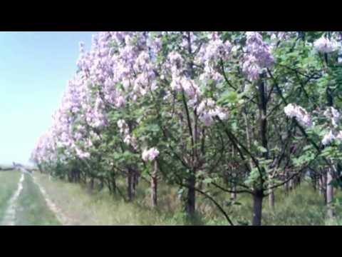 Scenic Plantation