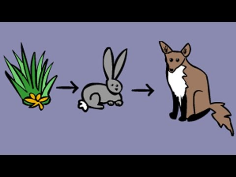 Food Chains and Food Webs. Education video game for kids