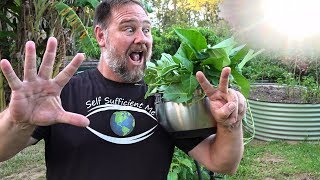 7 Top Vegetables EASY to Grow in a HOT Summer