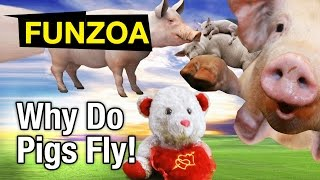 Why Do Pigs Fly - Funny Song Lullaby | Funzoa Mimi Teddy Video | Funny Animal Song