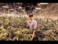 Inside Advanced Grow Labs