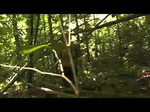Jungle Shelter From Natural Materials (Ray Mears)