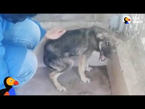 Dog Cries Every Time He's Touched — Until He Meets This Woman | The Dodo