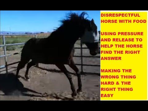 How To Correct A Horse Who Acts Disrespectful & food protective ear pinning - Rick Gore Horsemanship