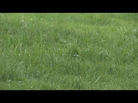 How to Grow Grass : When to Fertilize New Grass