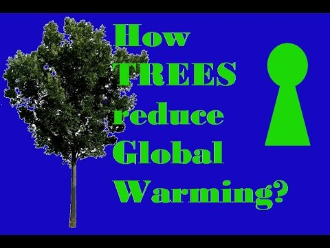 How TREES can reduce Global Warming?