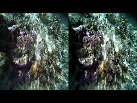 3D Cook Islands Coral Reef 01