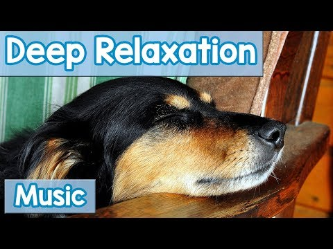 15 Hours of Deep Relaxation Music for Dogs! Music to Relax Your Dog Completely and Help with Sleep!