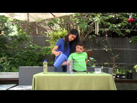 Fun Science Activity for Kids: Making a Lava Lamp