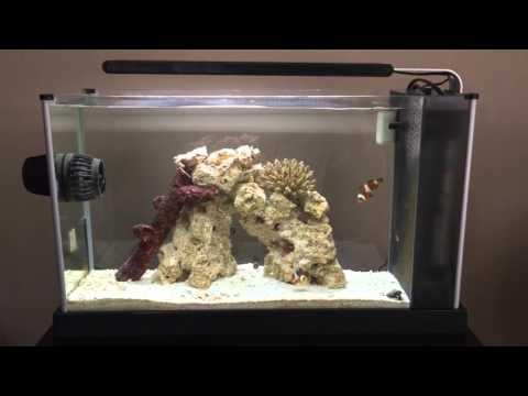 Fluval Spec V Saltwater Aquarium