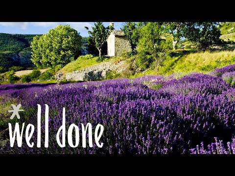 What Is Herbes De Provence? | Food 101 | Well Done