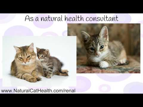 What Causes Cats To Get Urinary Tract Infections