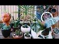Plant Tour! Welcome to my Succulent & Cacti Garden :)   Natasha Rose