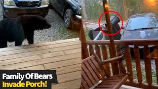 Group Of Bears Invade Family's Porch And Eat Left Over Food