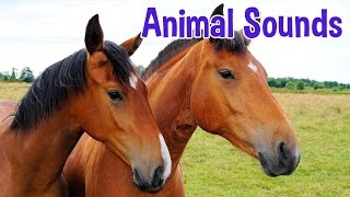 Animal Sounds for Children (20 Amazing Animals)