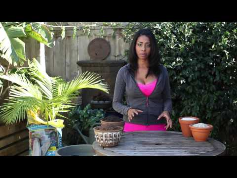 How to Plant With Homemade Fertilizers : Fertilizer & Gardening