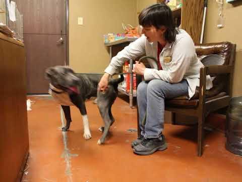 ADOPTED 6/16/18 - Wilson - ID #137058 - San Jacinto, CA - Ramona Humane Society