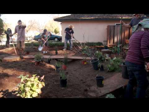 Installing a California native plant garden