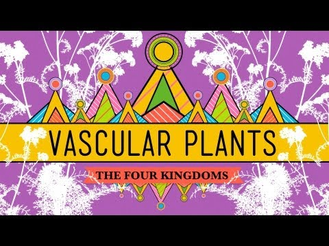 Vascular Plants = Winning! - Crash Course Biology #37