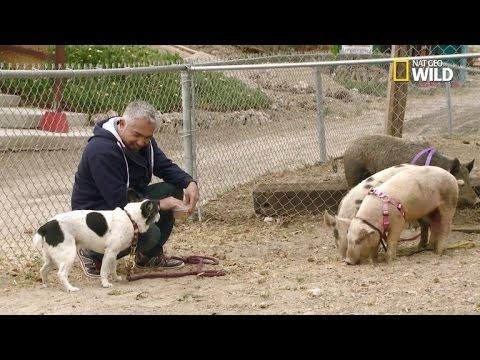 Owner of Dog Defends Cesar Millan: No Crime Took Place During Filming