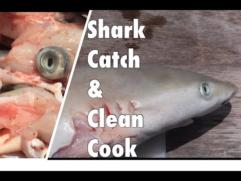 SHARK -CATCH and COOK  (bull shark)