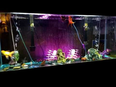 A Rant on Water Change and pH Myths with Goldfish