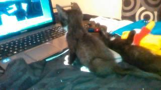 Kitty watching t v