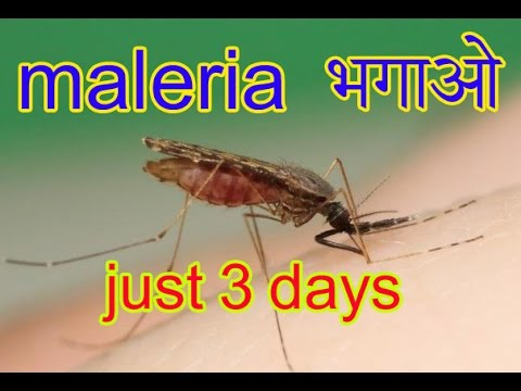 Maleria Treatment In Hindi And Urdu|Malaria Ka Gharelu Ilaj  In Hindi And Urdu