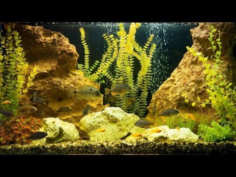 How to Deal with Green Fish Tank Water | Aquarium Care