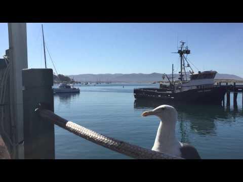 Picky Seagull Only Eats Steak