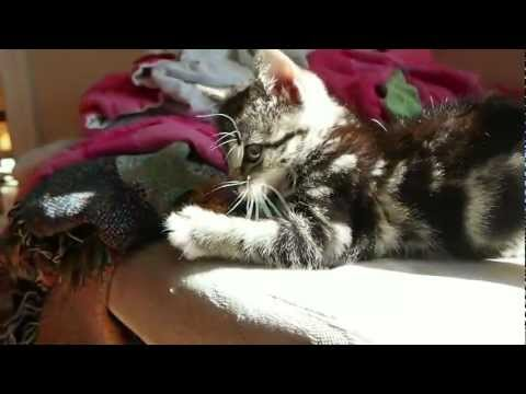How to Keep a Kitten Busy
