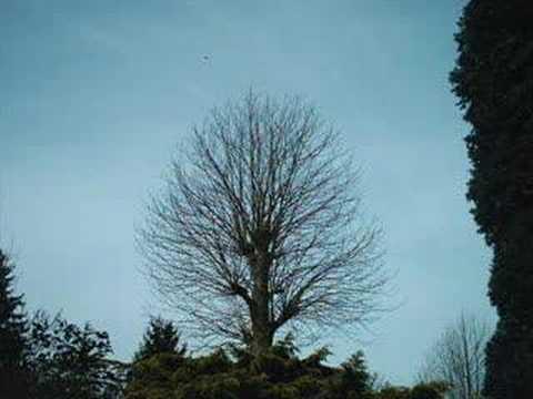 Global Warming: The Tree