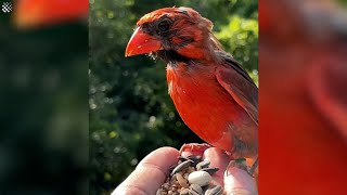 Hiker records as stunning birds perch on his hand