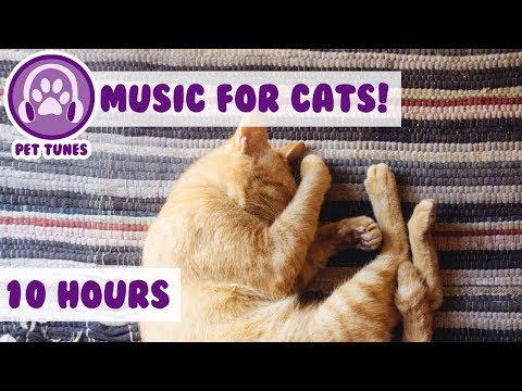 Relaxing Music to Help Your Depressed Anxious Cat Calm Down, Soothe My Kitten! Pet Therapy