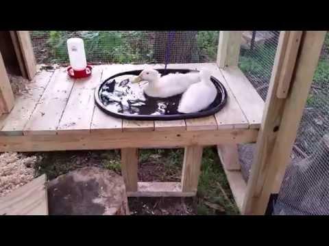 Backyard Duck Coop