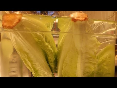 Cleaning Uncut Romaine