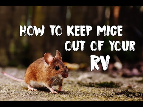 How To Prevent Mice In Your RV & Deal With Their Mess