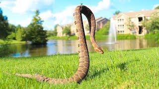 Caught Venomous Snake While Fishing!! (Dangerous)