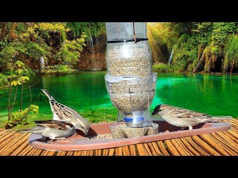 How To Make Bird GRAVITY Feeder at Home | Bird Food Dispenser from Plastic Bottle