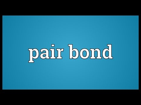 Pair bond Meaning