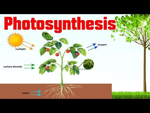 Photosynthesis in plants| Kids educational videos | Science videos for grade 3